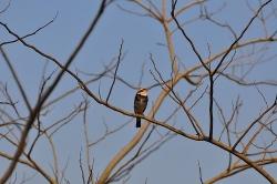 4月1日野鳥観察.jpg